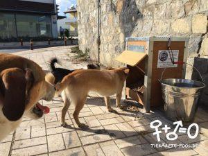 Futterstationen für Strassenhunde