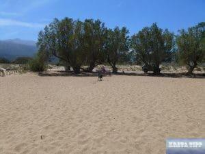 Tropical Beach von Malia