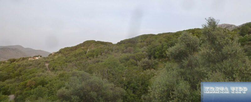Waldbestände Kreta
