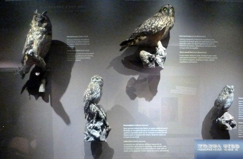 Eulen-Arten