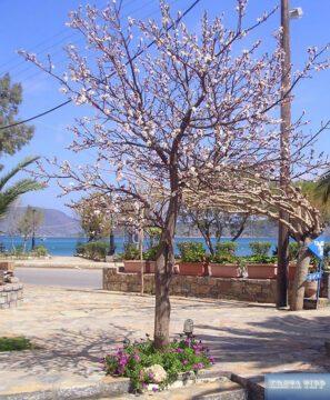 Baumblüte im März