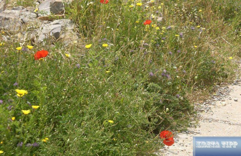 Zahlreiche Blumenarten
