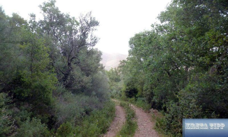 Wälder auf Kreta