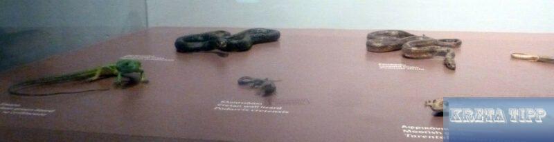 Kretische Reptilien
