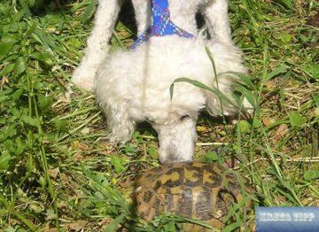 Schildkröte auf Kreta